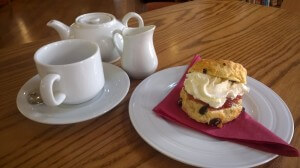 Fresh Fruit Scone with Jam & Cream